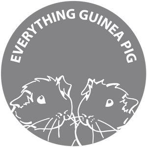 Everything Guinea Pig