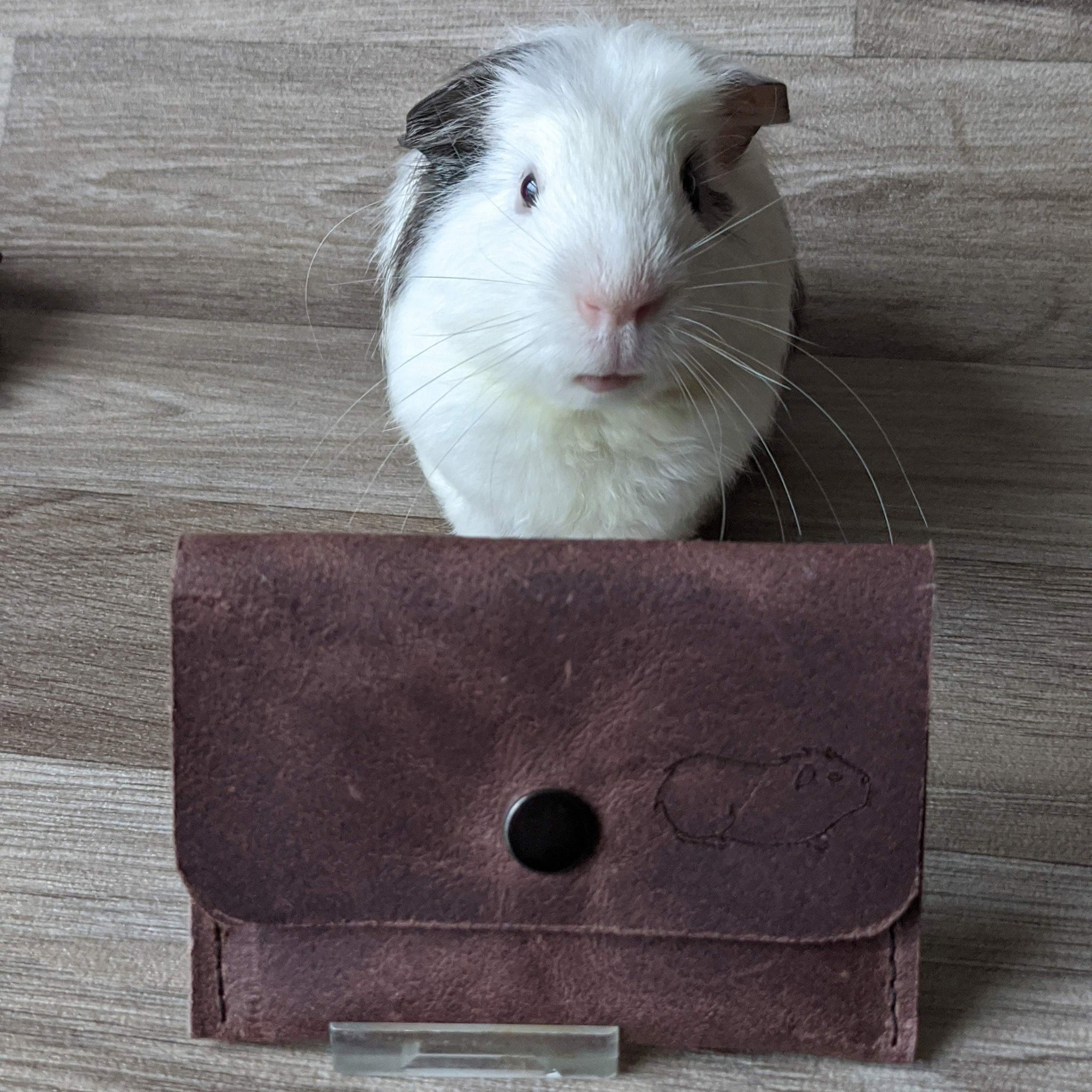 Guinea Pig Coin Purse - Brown Leather