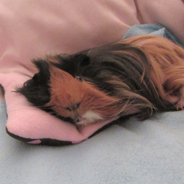 Guinea Pig Chaise Longue - Pink/Brown - Everything Guinea Pig