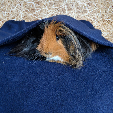 Floor Time Burrow Bag - Blue - Everything Guinea Pig
