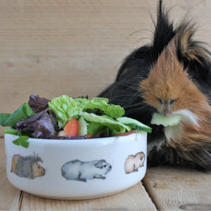 Guinea Pig Pet Bowl - Guinea Pig Train - Everything Guinea Pig