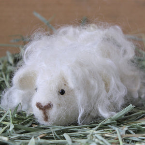 Guinea Pig Needle Felting Craft Kit - Penelope White Texel - Everything Guinea Pig