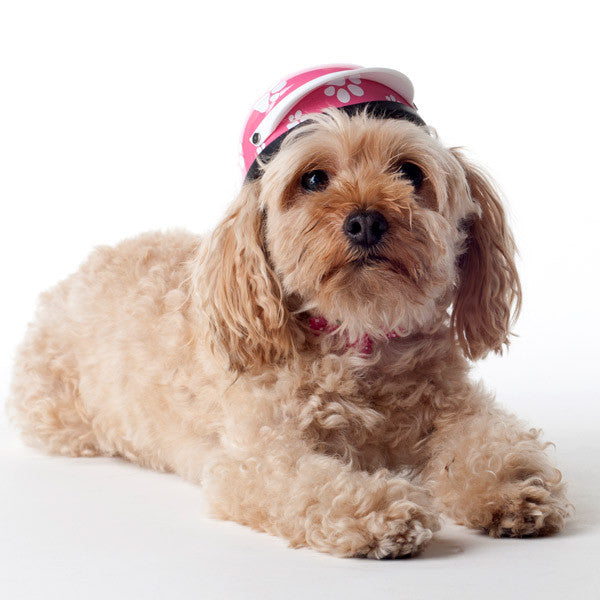 Dog Helmet - Pink Paws - Model