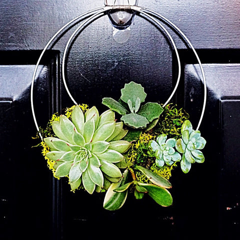 "Living Succulent Wreath 7""W x 8""L"