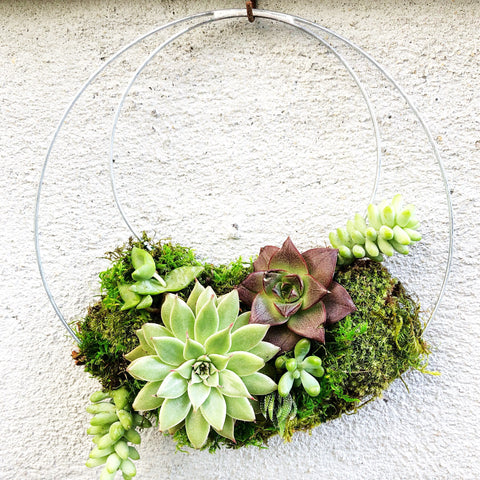 Living Succulent Wreath 8.5""