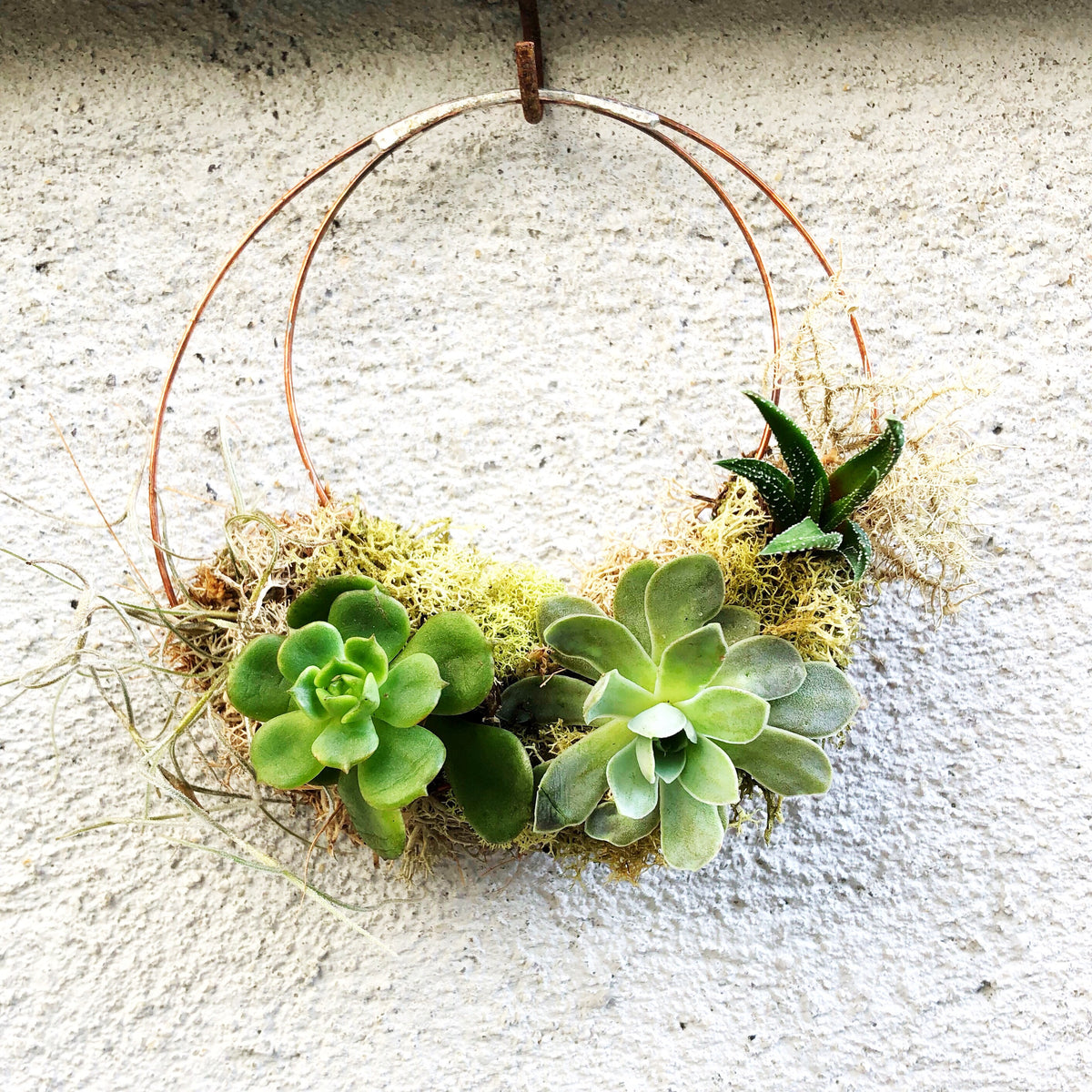 Mini Succulent Wreath Moon Bath Botanicals