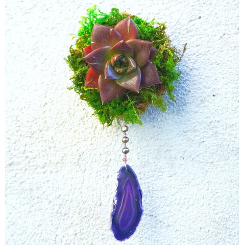 "Floating Succulent Wreath 4""W x 8""L"