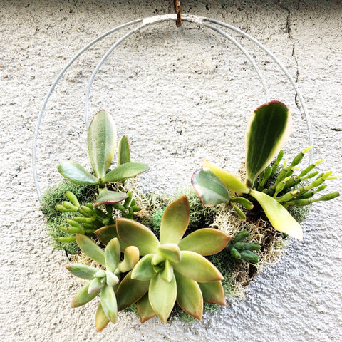 Living Succulent Wreath 6.5""