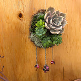 "Floating Succulent Wreath 3""W x 6""L"