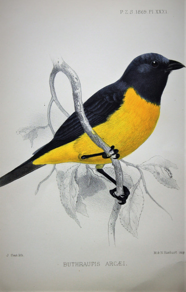 Lithography of a Bird