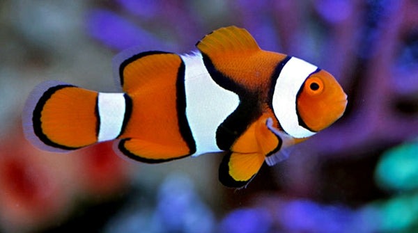 Find the latest fish and aquarium supplies at PetSmart. With food, tanks, filters, décor and more, we offer the products and accessories you need for healthy, happy pets.
