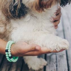 Lokai - Animal Rescue Bracelet