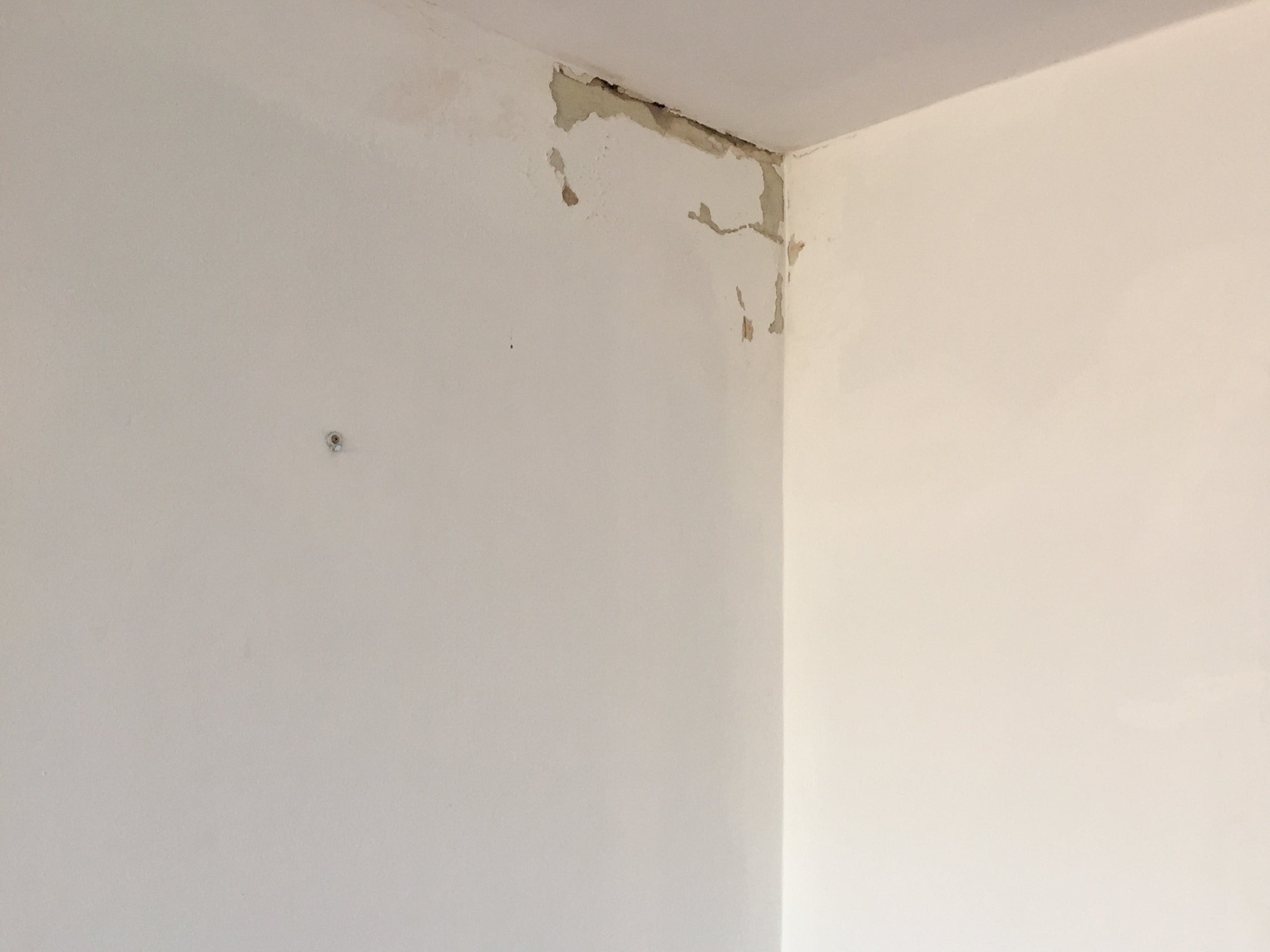 #littletoorak water damage