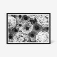Peony and Anemone floral wall art print black and white botanical photography. black frame