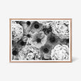 Peony and Anemone floral wall art print black and white botanical photography. Oak frame