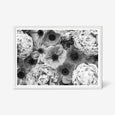 Peony and Anemone floral wall art print black and white botanical photography. White frame