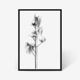 Cotton Stem floral wall art print black and white botanical photography with black frame