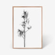 Cotton Stem floral wall art print black and white botanical photography with oak frame