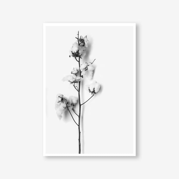Cotton Stem floral wall art print black and white botanical photography