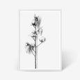 Cotton Stem floral wall art print black and white botanical photography with white frame