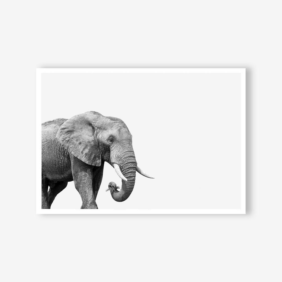 ELEPHANT WALL ART PRINT, BLACK AND WHITE ANIMAL PHOTOGRAPHY
