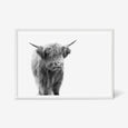 Highland Cow animal wall art print black and white animal photography with white frame