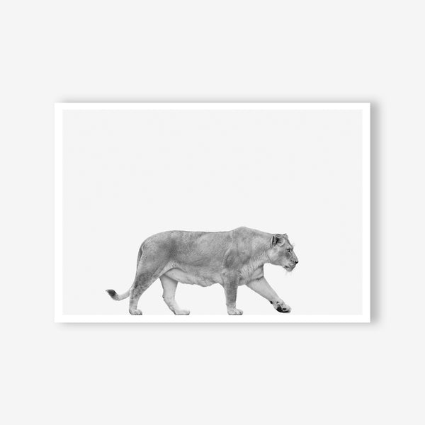 Lioness animal wall art print black and white animal photography