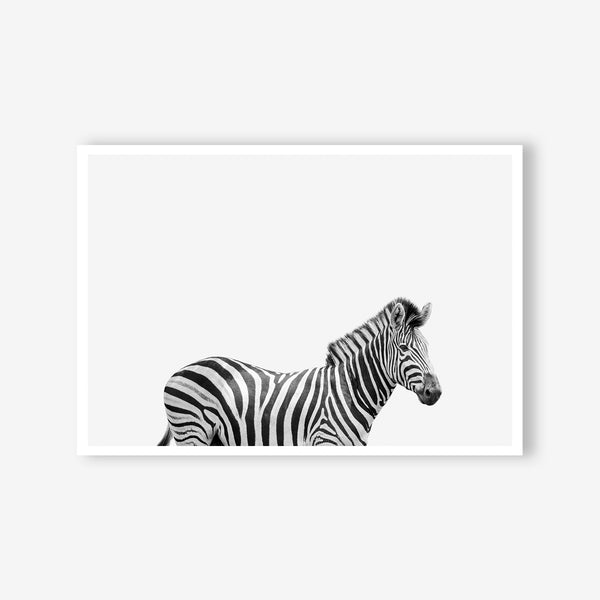 Zebra wall art print black and white animal photography