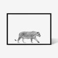 Lioness animal wall art print black and white animal photography with black frame