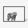 Tiger wall art print black and white animal photography in black frame