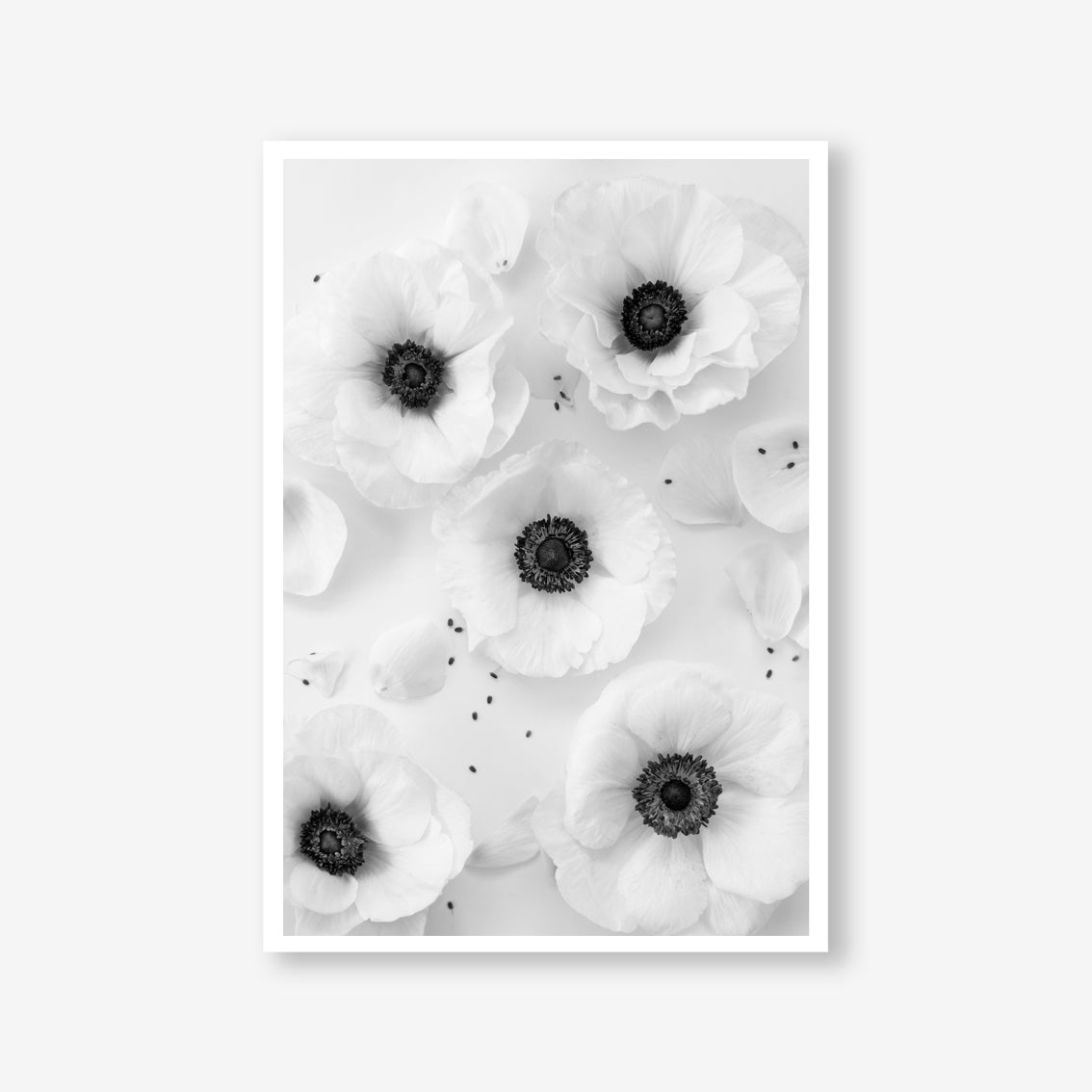 Anemone floral wall art print black and white botanical photography