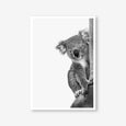 Koala animal wall art print black and white animal photography