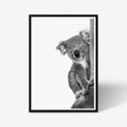 Koala animal wall art print black and white animal photography with black frame