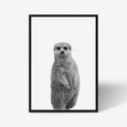 Meerkat animal wall art print black and white animal photography with black frame