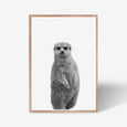 Meerkat animal wall art print black and white animal photography with oak frame