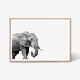 ELEPHANT WALL ART PRINT, BLACK AND WHITE ANIMAL PHOTOGRAPHY with oak frame