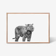 Tiger wall art print black and white animal photography in oak frame