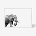 ELEPHANT WALL ART PRINT, BLACK AND WHITE ANIMAL PHOTOGRAPHY with WHITE Frame