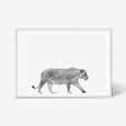 Lioness animal wall art print black and white animal photography with white frame
