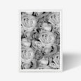 Roses floral wall art print black and white botanical photography with white frame