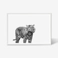 Tiger wall art print black and white animal photography in white frame