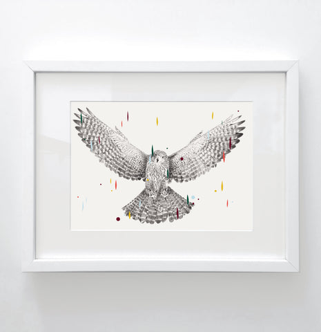 Kārearea - Limited edition print