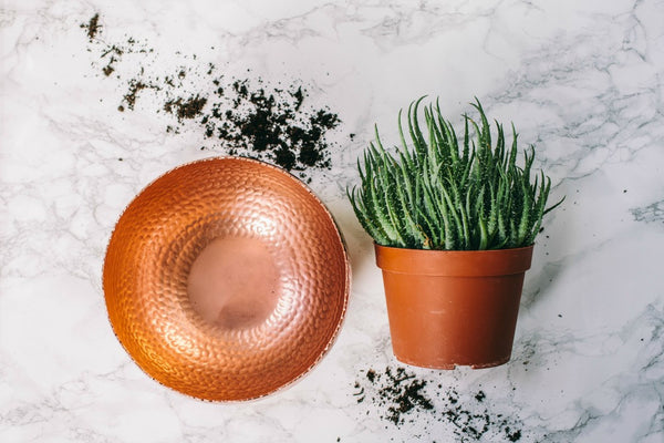 collectie.co.uk Copper Planters Large with succulent plant