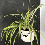 Nosy hanging flower pot, large size, closed eyes, mustache