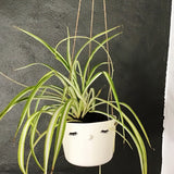 Nosy hanging flower pot, large size, closed eyes