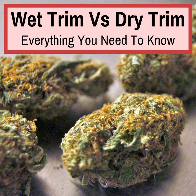 Dry trimming vs wet trimming
