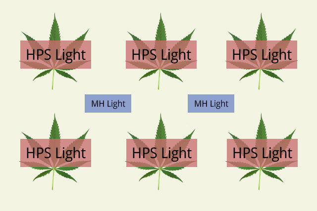 example setup for marijuana grow lights