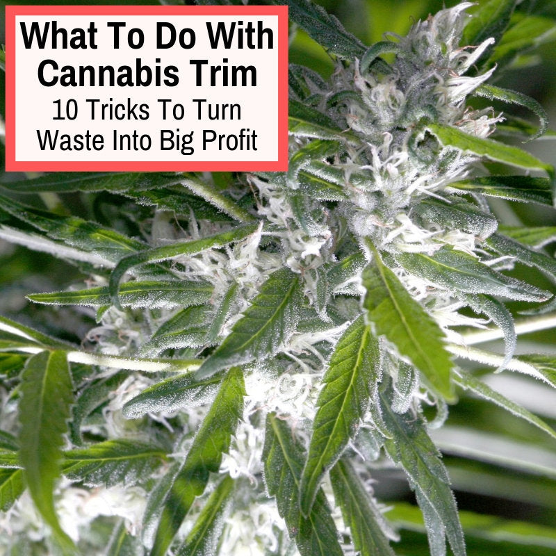 how to use marijuana trim