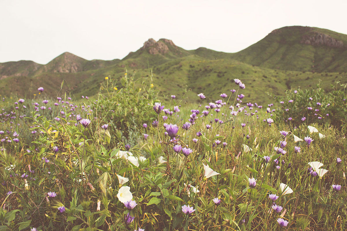 Freedom Rise - Camarillo Wildflowers
