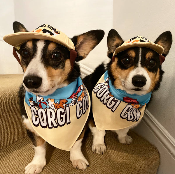 CORGI CON DOGGO HAT | BUTTER